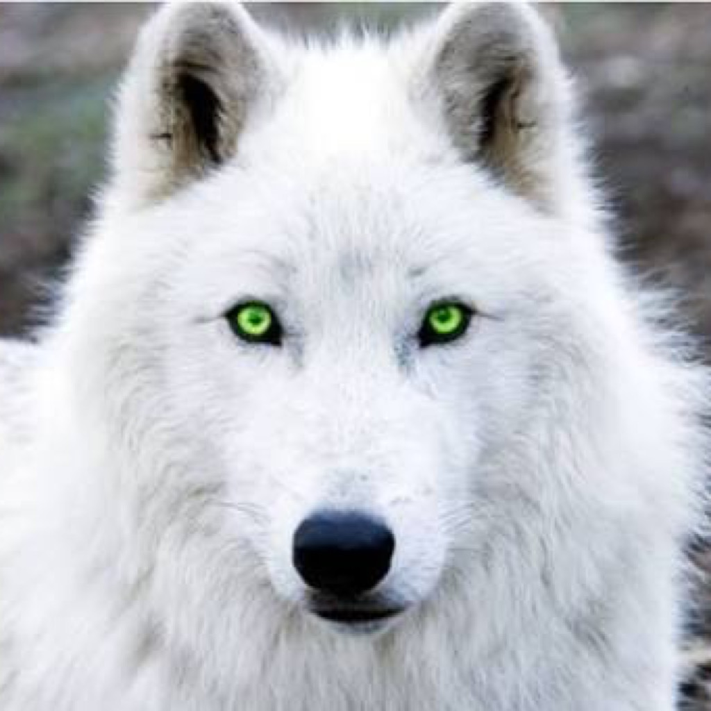 archangel_wolf