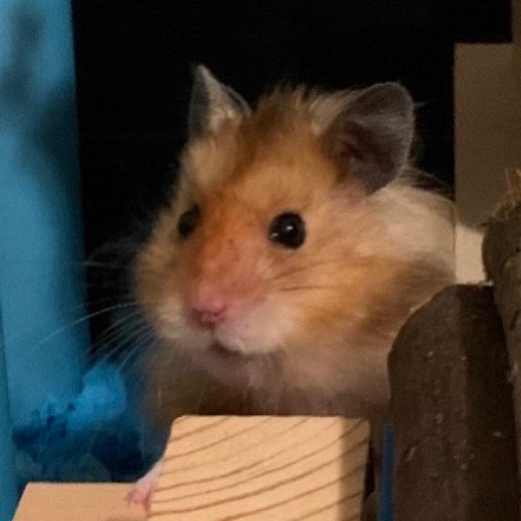 animal_cracker